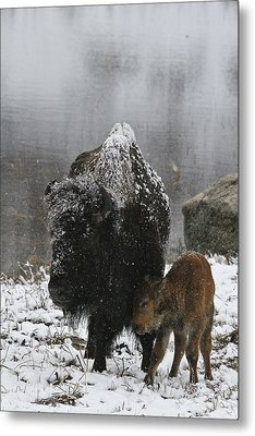 Metal Print featuring the photograph Toughing It Out by Gary Hall