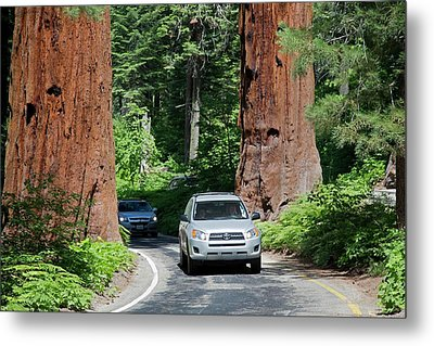 Tourism In Sequoia National Park Metal Print