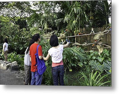 Tourists Viewing The Colorful Birds Metal Print