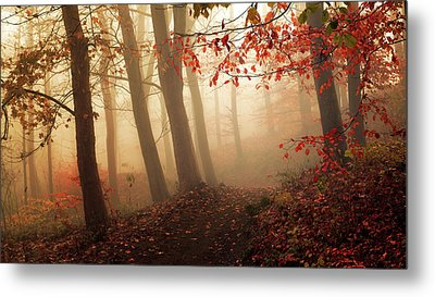 Towards The Light. Metal Print by Leif L?ndal