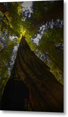 Towering Giants Metal Print