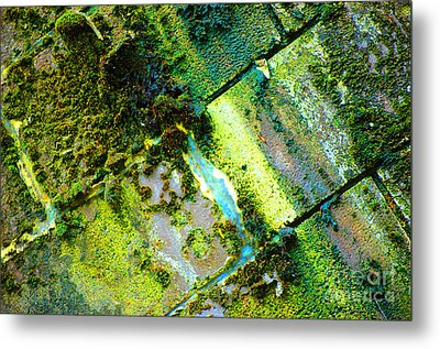 Metal Print featuring the photograph Toxic Moss by Christiane Hellner-OBrien
