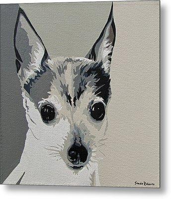 Toy Fox Terrier Metal Print by Slade Roberts