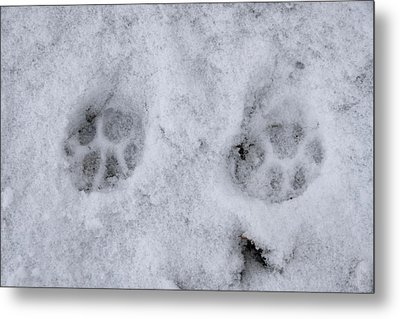 Traces Of A Cat In The Snow Netherlands Metal Print by Ronald Jansen