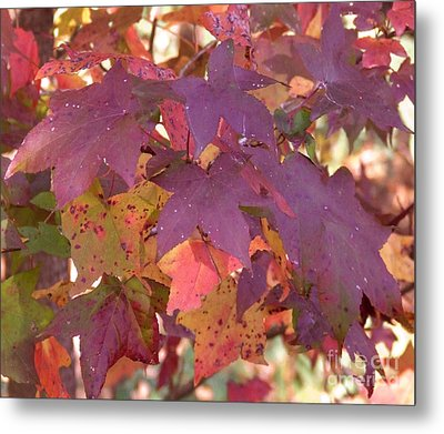 Metal Print featuring the photograph Traces Of Fall by Andrea Anderegg