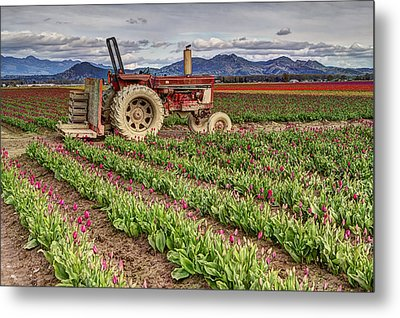 Tractor And Tulips Metal Print