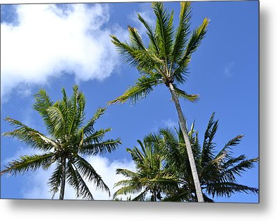 Tradewinds Metal Print