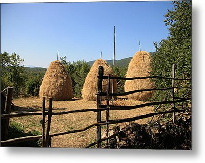 Traditional Agriculture Metal Print by Frederic Vigne