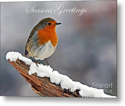 Traditional Christmas Robin Metal Print by Paul Scoullar