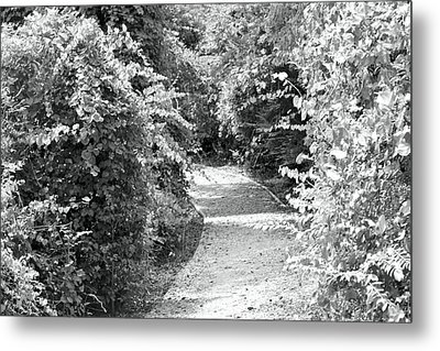Trail In Black And White Metal Print by Carolyn Ricks