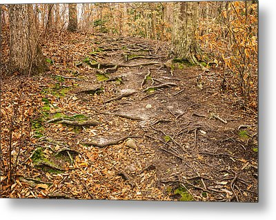 Trail In Ryder Conservation Land Metal Print by Frank Winters