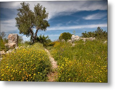 Metal Print featuring the photograph Trail Of Spring by Uri Baruch