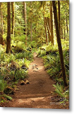 Trail Through The Rainforest Metal Print by Carol Groenen