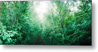 Trail Through The Woods Along Fort Metal Print