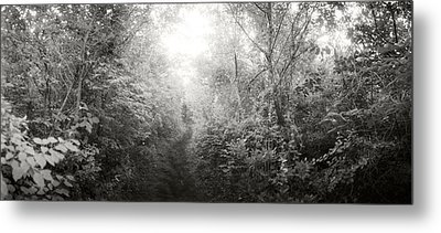 Trail Through The Woods At Fort Tilden Metal Print