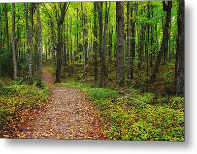 Trail To Miners Falls Metal Print