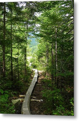 Trail To Sandy Stream Pond Metal Print