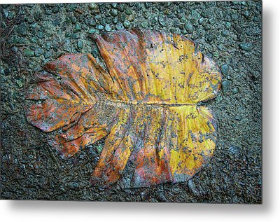Metal Print featuring the photograph Trampled Leaf by Britt Runyon