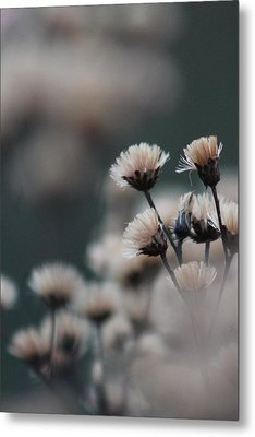 Tranquil Metal Print by Bruce Patrick Smith