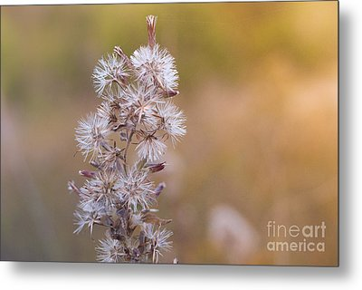 Transition 3 Metal Print by Barbara Shallue