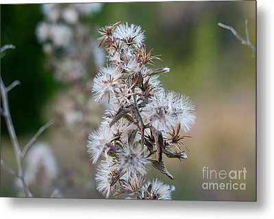 Transition Metal Print by Barbara Shallue