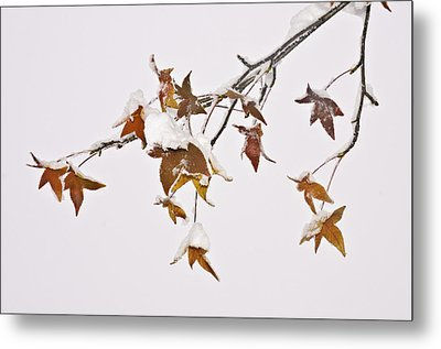 Metal Print featuring the photograph Transition by Sherri Meyer