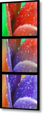 Metal Print featuring the photograph Transitions by Robert Culver