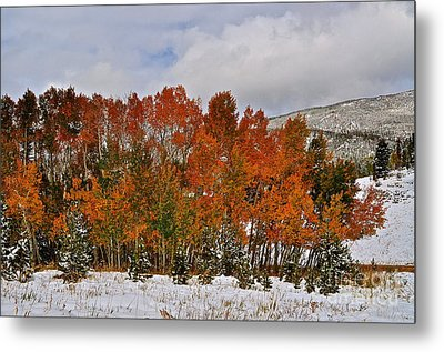 Transitions Metal Print by Susan Chesnut