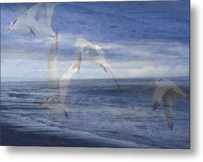 Transparent Flight Metal Print by James Chesnick
