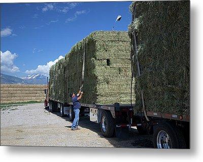 Transporting Bales Of Hay Metal Print