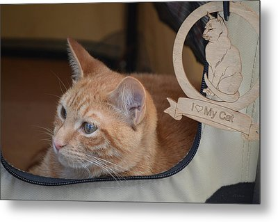 Traveling Cat - Orange Tabby Metal Print