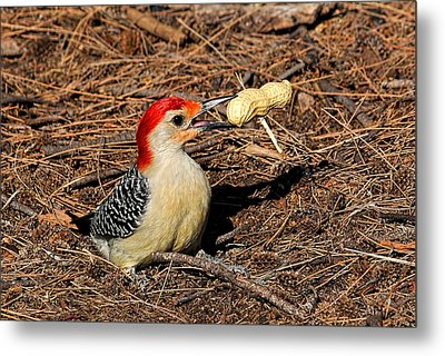 Treat Time Metal Print by HH Photography of Florida