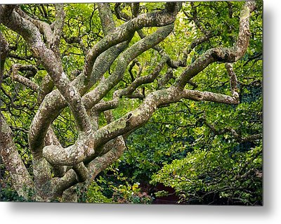 Tree #1 Metal Print by Stuart Litoff