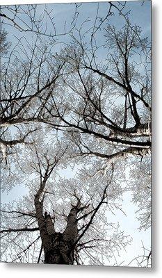 Metal Print featuring the photograph Tree 2 by Minnie Lippiatt