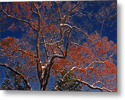 Metal Print featuring the photograph Tree Against Dark Sky by Andy Lawless