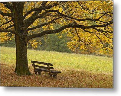 Tree And Bench In Fall Metal Print by Matthias Hauser