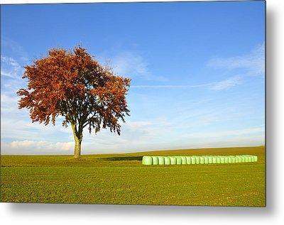 Tree And Hay Bales Metal Print by Aged Pixel