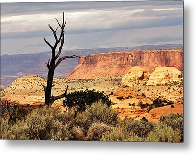 Tree And Mesa Metal Print by Marty Koch