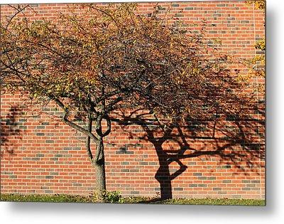 Tree And Shadow 1 Metal Print