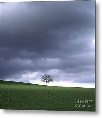Tree And Stormy Sky  Metal Print by Bernard Jaubert