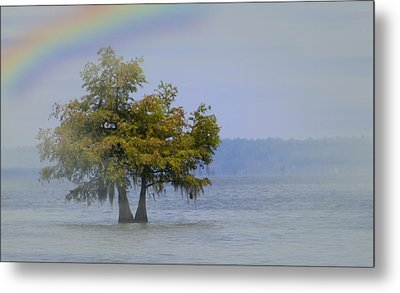 Tree And The Rainbow Metal Print by Bob Pardue