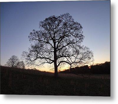 Tree At Dawn Metal Print by Michael Porchik