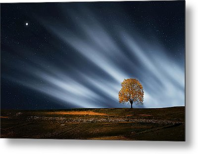Tree At Night With Stars Metal Print