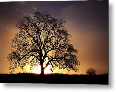 Tree At Sunrise In The Fog Metal Print
