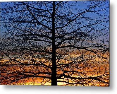 Tree At Sunset Metal Print by Daniel Woodrum