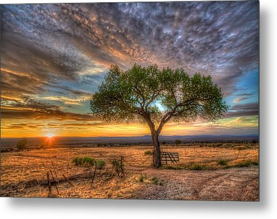 Tree At Sunset Metal Print