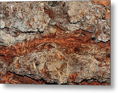 Tree Bark Metal Print by Marwan Khoury