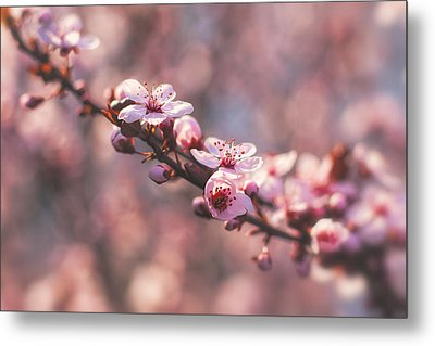 Metal Print featuring the photograph Tree Branch Bloom by Joshua Minso