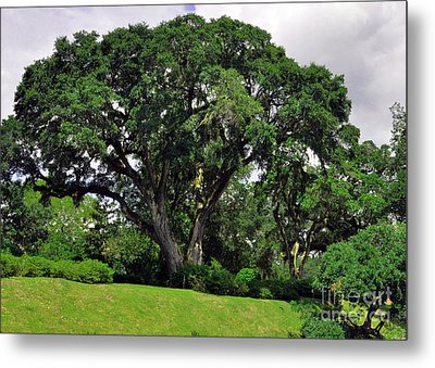 Tree By The River Metal Print
