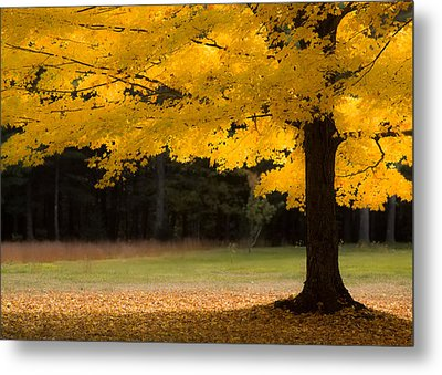 Tree Canopy Glowing In The Morning Sun Metal Print by Jeff Folger